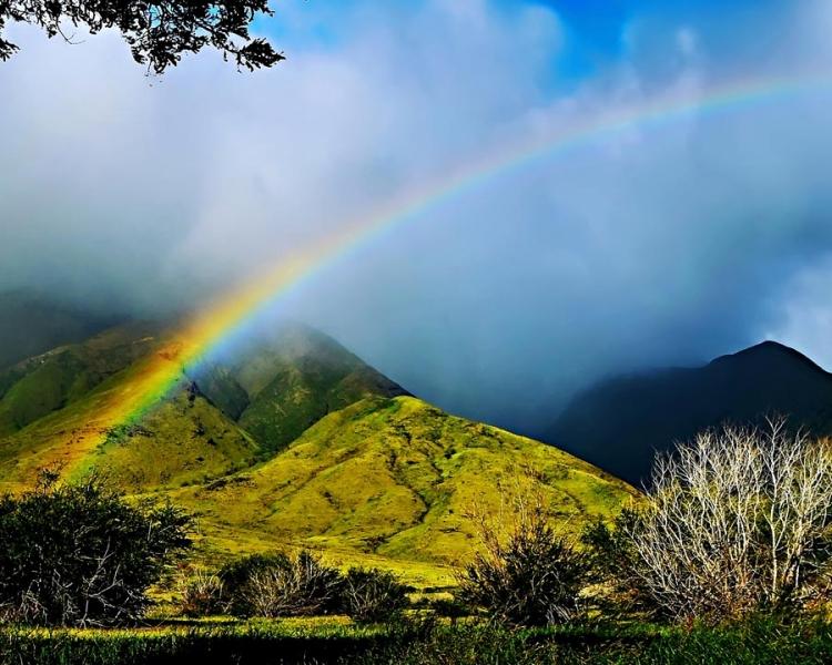 HawaiianRainbow