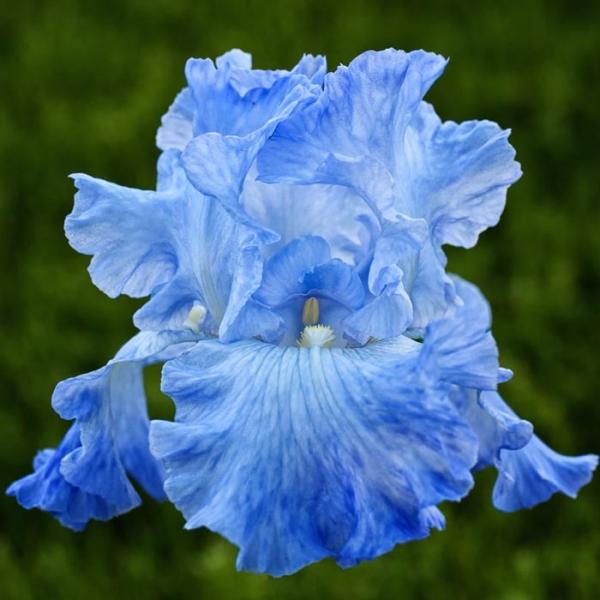 blue_beauty_1