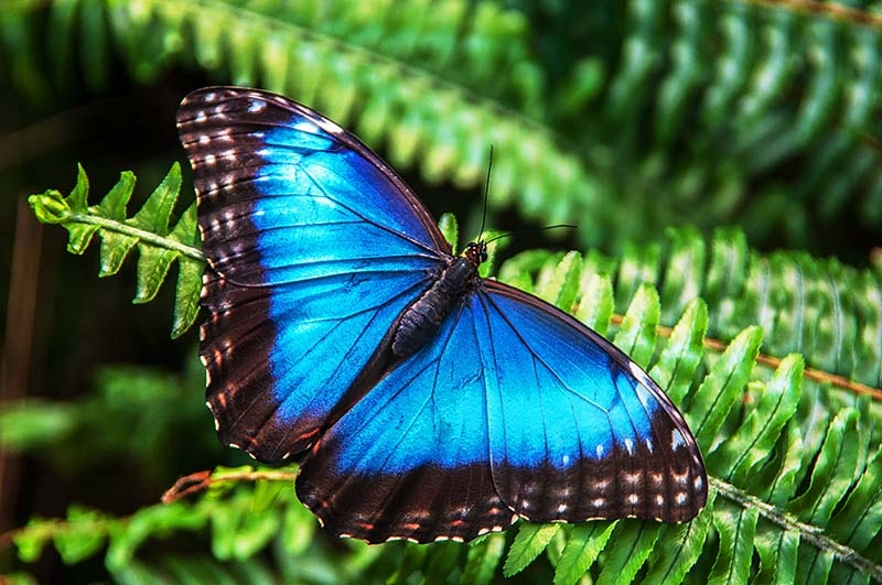 c85-Hues_of_Blue_sm