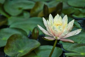 flower0058topaz